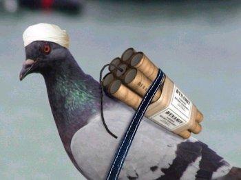 pigeonbomb